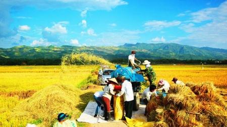 """Gạo Điện Biên – Hạt gạo xứ """"Mường Trời"""""""