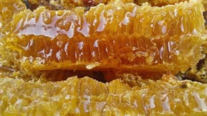 Mật ong Rừng Điện Biên – Đặc sản Tây Bắc