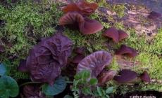 Cách chọn nấm hương rừng mộc nhĩ rừng ngon