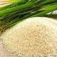 Gạo Điện Biên: Danh xưng đệ nhất gạo ngon vùng Tây Bắc