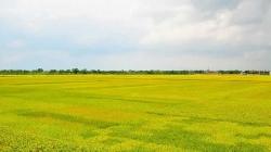 Công ty CP Giống Nông Nghiệp Điện Biên đối tác tin cậy của người nông dân